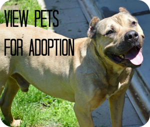 View all adoptable pets