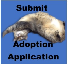Submit Application