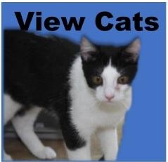 ViewCats