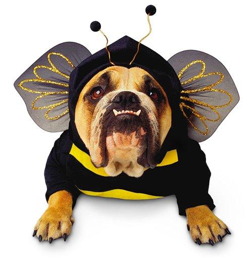 Pets Halloween Costumes  sc 1 st  Better Days Animal League & Pets Halloween Costumes u2013 Better Days Animal League