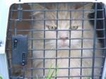 [2012-05-19] Rabies Clinic 12