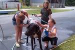 [2012-06-16] Dog-Car Wash 01