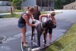 [2012-06-16] Dog-Car Wash 02