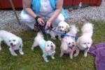 [2012-06-16] Dog-Car Wash 04