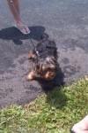 [2012-06-16] Dog-Car Wash 06