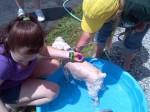[2012-06-16] Dog-Car Wash 07