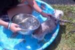[2012-06-16] Dog-Car Wash 08