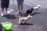 [2012-06-16] Dog-Car Wash 09