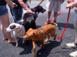 [2012-06-16] Dog-Car Wash 13