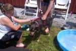 [2012-06-16] Dog-Car Wash 14