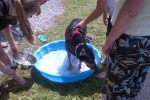 [2012-06-16] Dog-Car Wash 15