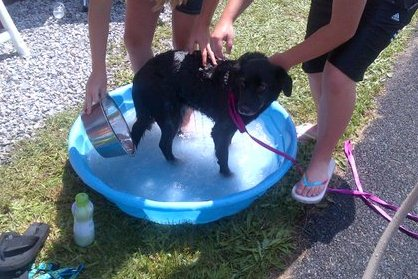 [2012-06-16] Dog-Car Wash 17