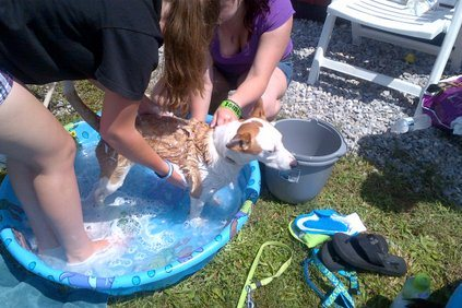 [2012-06-16] Dog-Car Wash 18