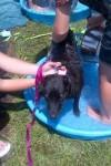 [2012-06-16] Dog-Car Wash 19