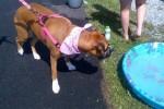 [2012-06-16] Dog-Car Wash 21