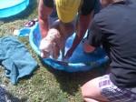 [2012-06-16] Dog-Car Wash 23