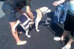 [2012-06-16] Dog-Car Wash 24