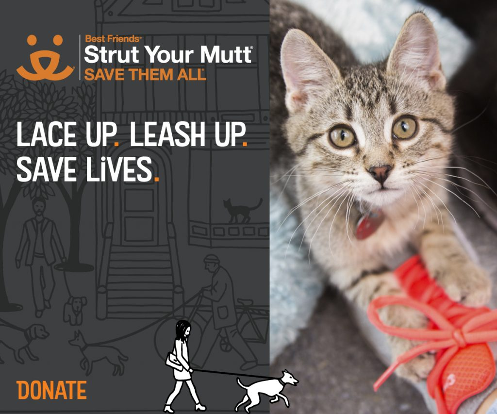 Facebook Post Graphic (Cat) - Donate